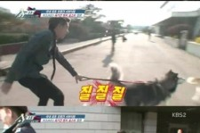 zico dragged around by a dog