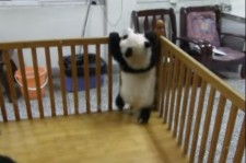 Escaping Baby Pandas from the Crib