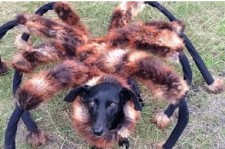 Mutant Giant Spider Dog Prank
