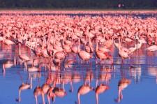 In The Pink In Kenya