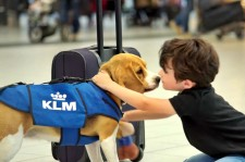 This Cutie At KLM Airlines Will Return Your Lost Items