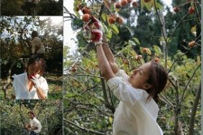 lee hyori picking persimmons