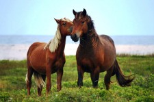 Canada's Newest National Park Is Home To Wild Horses