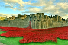 Poppies Pour Like Blood From The Tower Of London To Honor Fallen Soldiers