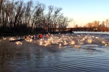 See This Outrageous Video Of Rowers Getting Attacked By Flying Asian Carps