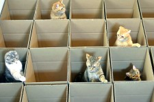 Kittens Adorably Play In Grid Of Cardboard Boxes