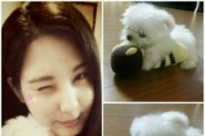 seohyun puppy