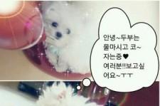 Girls' Generation Seohyun Reveals Affection Towards her Puppy