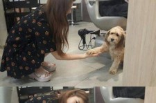 miss A's Suzy meets Lee Hyori's dog SoonShim